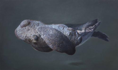 傅浩轩  北极匿声 2015 油彩画布  97×162cm