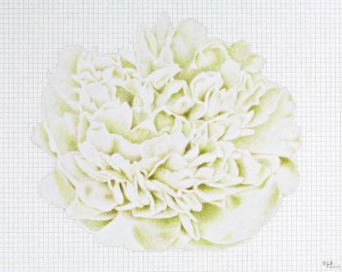 金芬華 清香 油彩畫布 72.5x91cm